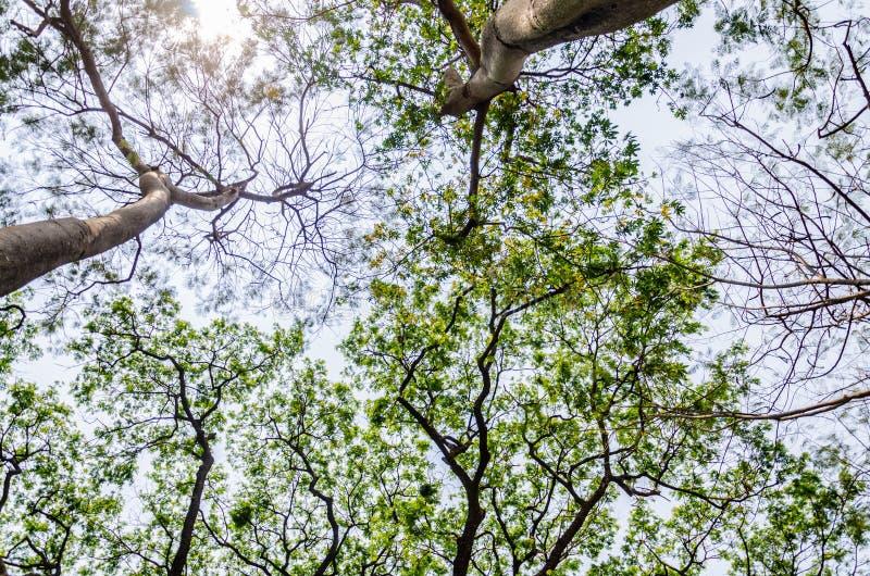 Drzewa i niebo z słońcem zdjęcie royalty free