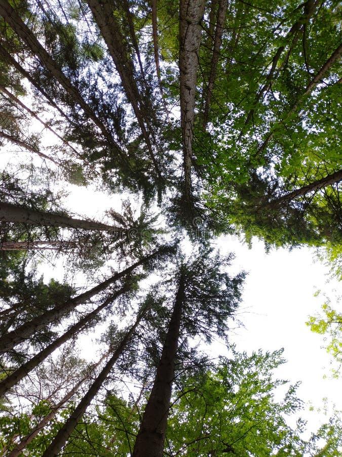 Drzewa I patrzeć nieskończoność obraz royalty free