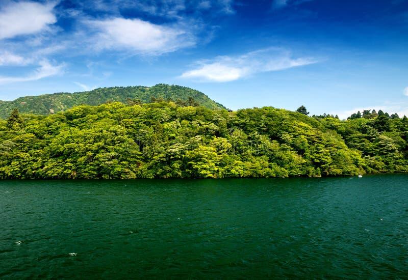 Drzewa i roślinność nad Jeziornym Ashi w Hakone, Japan obrazy stock