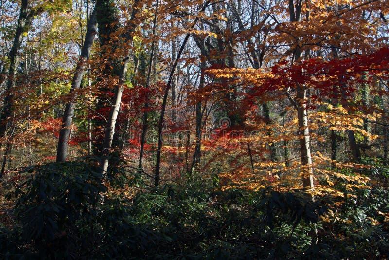 Drzewa i roślinność przy Welwyn prezerwy okręgiem administracyjnym Parkują Long Island Nowy Jork angielszczyzny zdjęcie stock