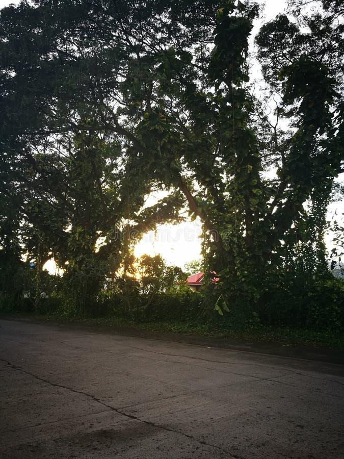 2 drzewa i słońce fotografia royalty free