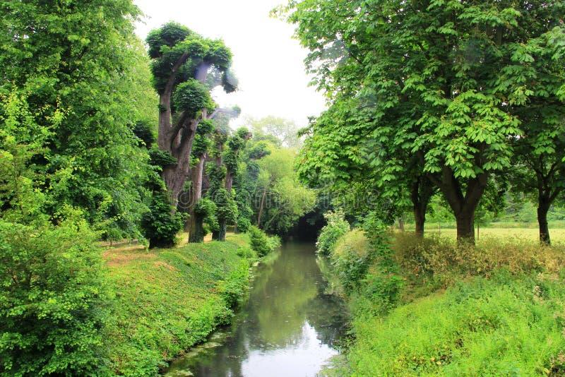 Drzewa i strumyk zdjęcia royalty free