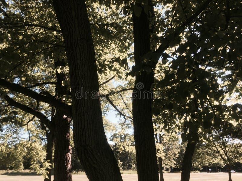 Drzewa i trawa zdjęcia royalty free