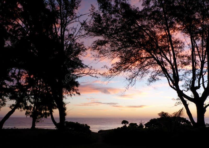 Drzewa i Waimanalo plaża przy świtem fotografia stock