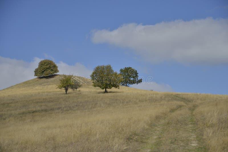 Drzewa i wiejska droga nad wzgórzem w wczesnej jesieni obrazy royalty free