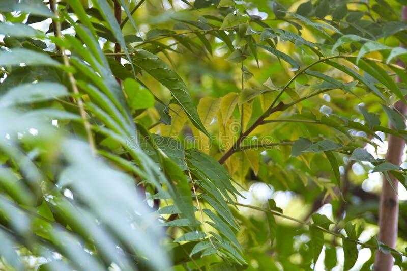 Drzewa i zieleń liście po deszczu obraz royalty free