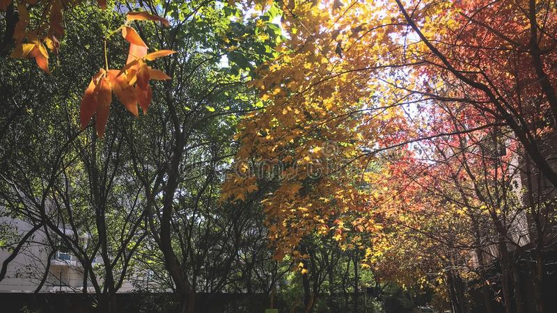 Drzewa jesień obrazy stock