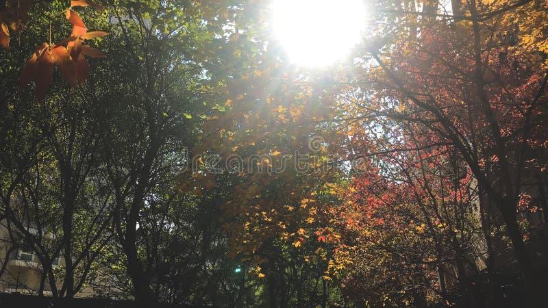 Drzewa jesień obraz stock