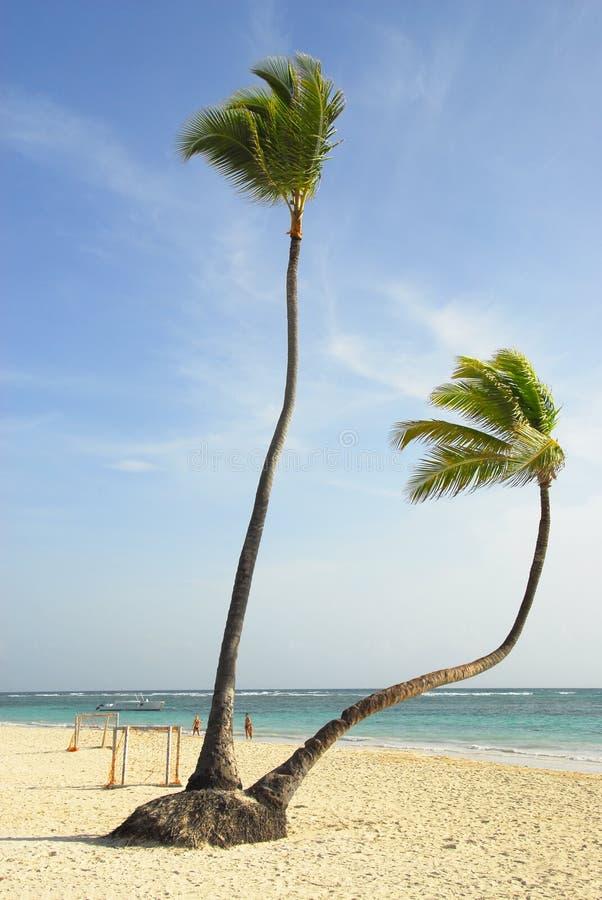 drzewa kokosowe tropikalne fotografia stock
