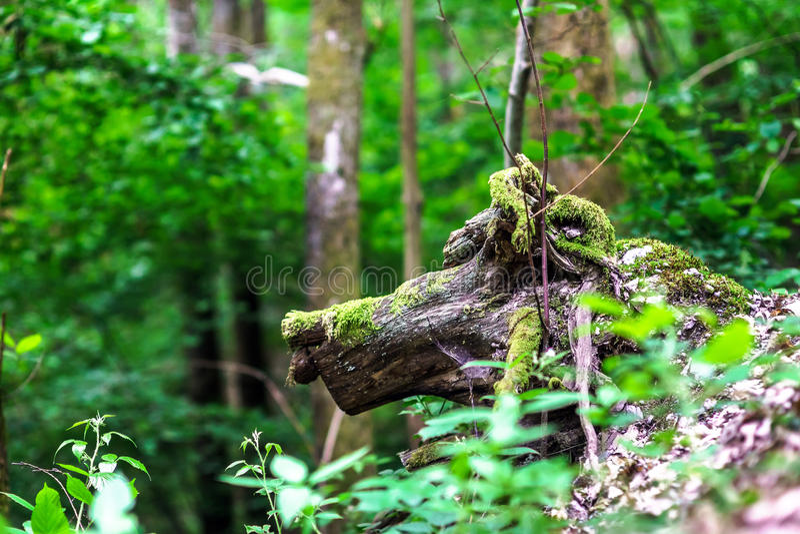 Drzewa korzeniowy jednakowy zwierzę obraz stock