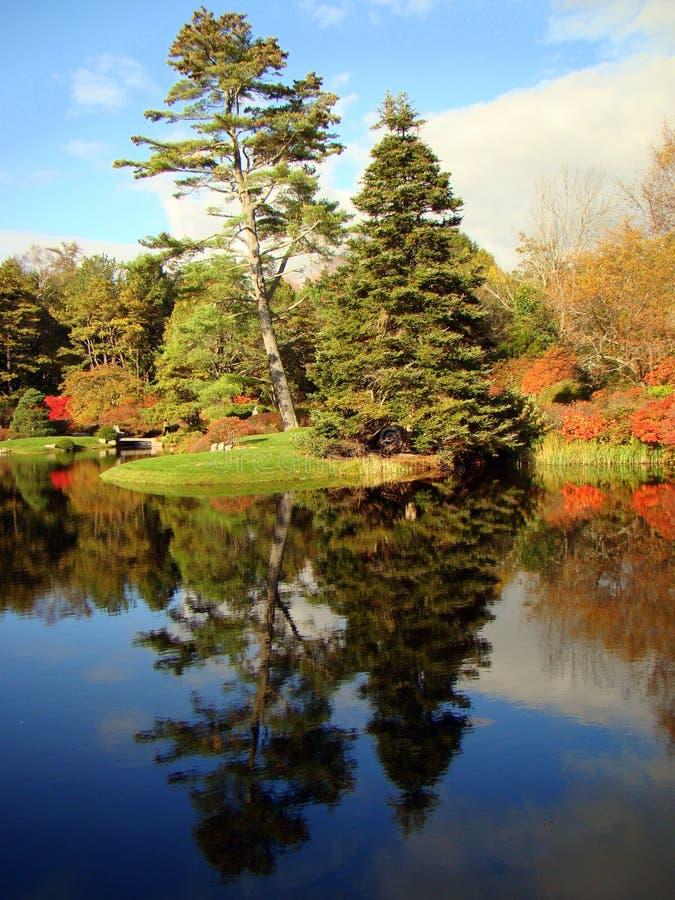Drzewa krajobraz przez Asticou Azalii Ogród, Maine obraz stock