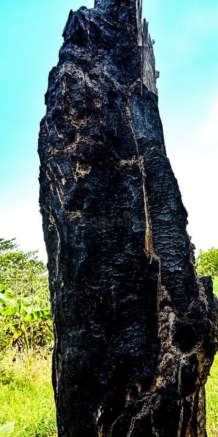 Drzewa które palili obrazy stock