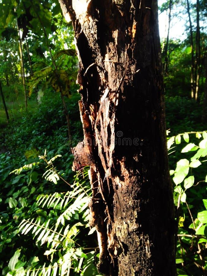 Drzewa które strugają daleko spojrzenie w ten sposób jasnego ponieważ dostają bezpośredniego światło słoneczne zdjęcia royalty free