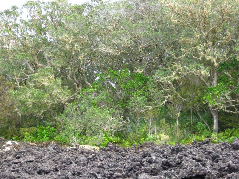 Drzewa & lawy skała obrazy royalty free