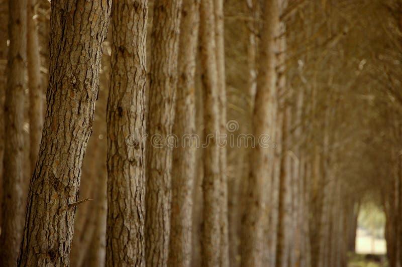 drzewa leśne obraz royalty free