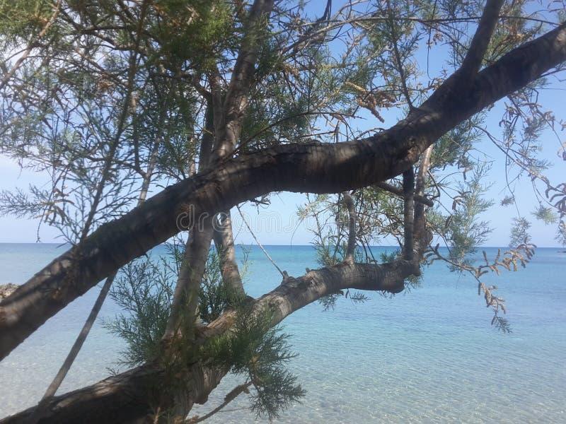 Drzewa morskie zdjęcie royalty free