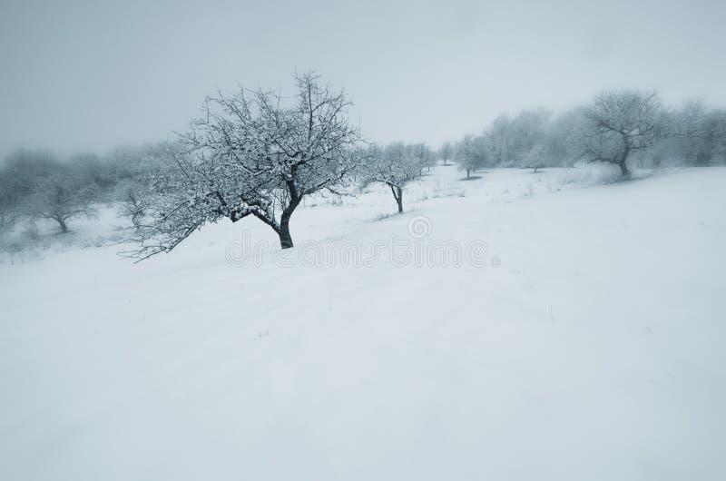 Drzewa na łące w zimie zdjęcia royalty free
