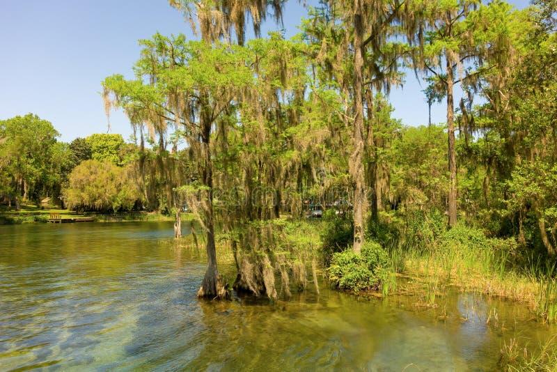 Drzewa na bankach krystaliczna rzeka zdjęcie stock