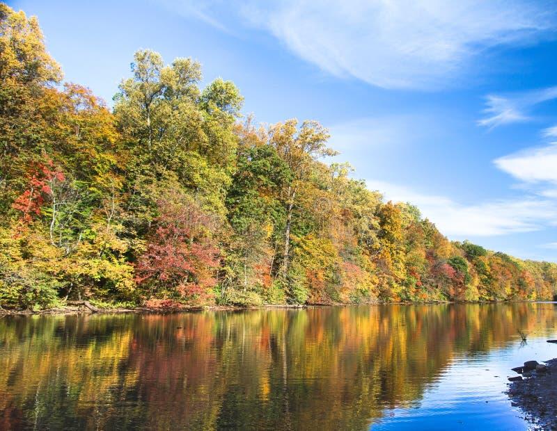 Drzewa na brzeg Jeziorna niespodzianka obrazy royalty free