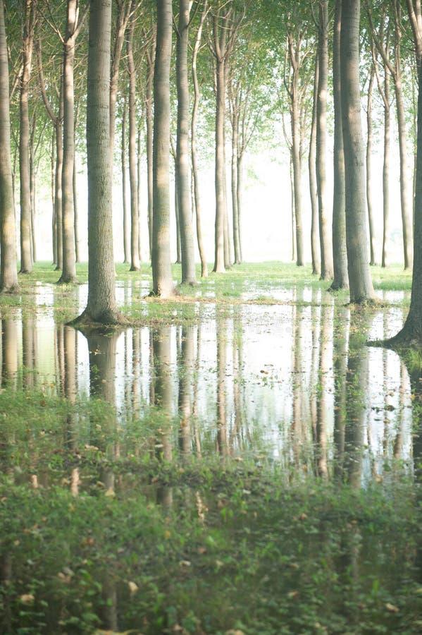 Drzewa na Drzewnym gospodarstwie rolnym w Południowym Francja obraz stock