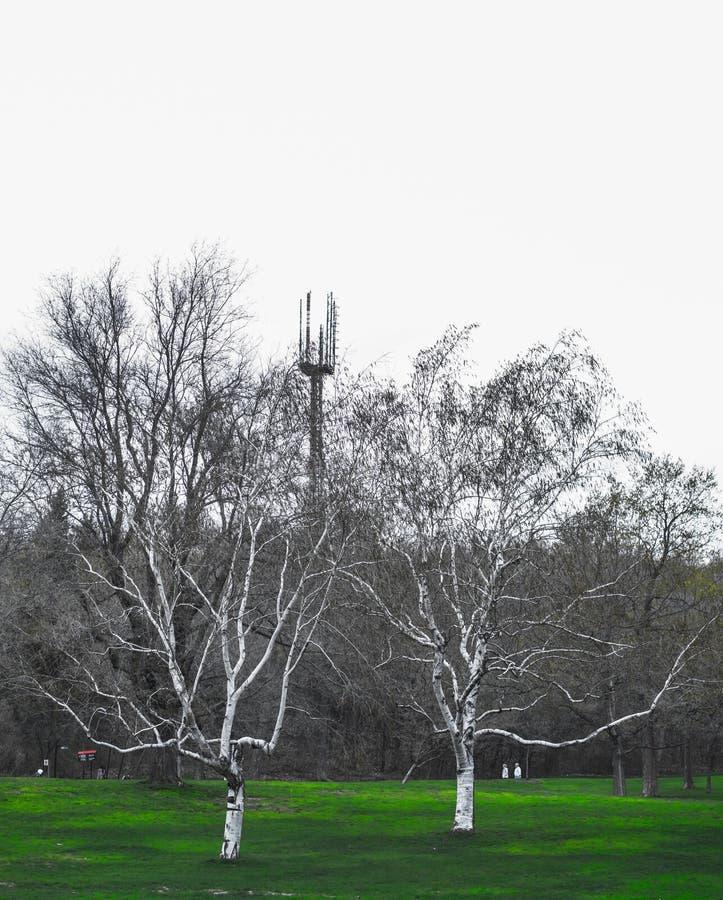 Drzewa na górze obrazy royalty free