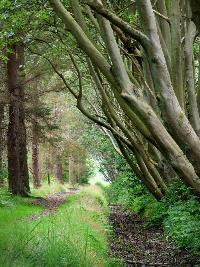 Drzewa na Holenderskiej wyspie Texel obrazy royalty free