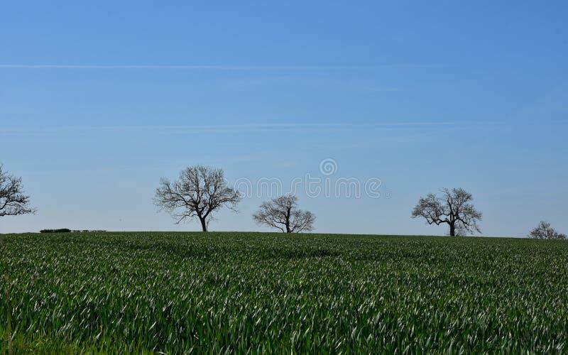 Drzewa na horyzoncie Po Gęstych Zielonych poly fotografia royalty free