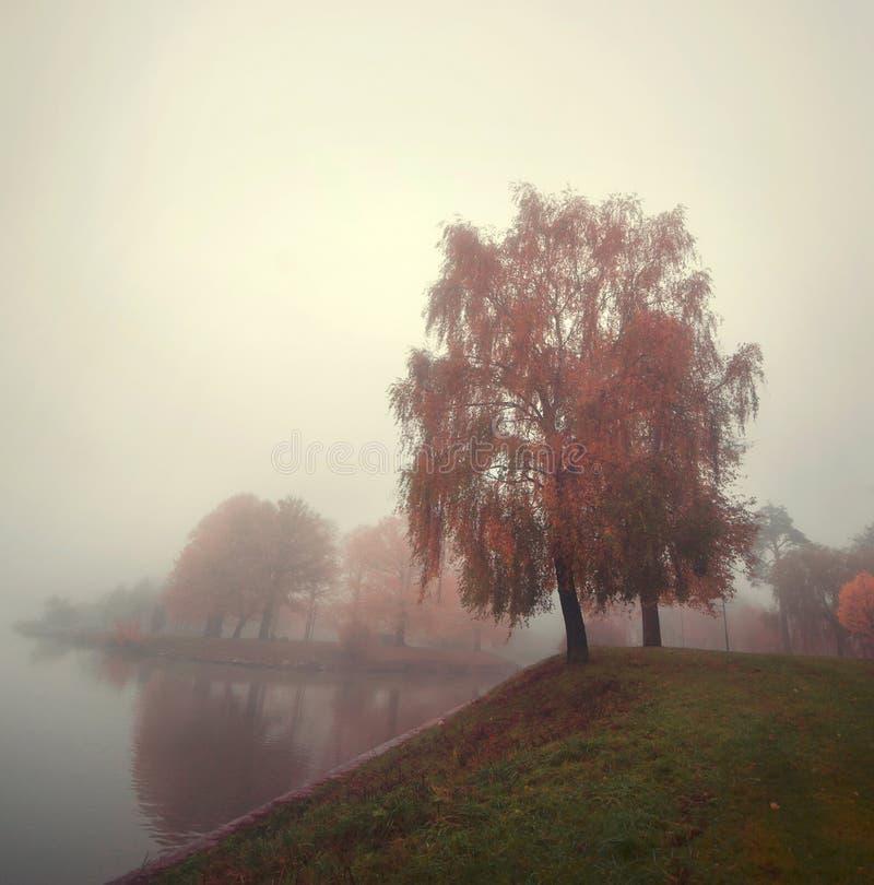 Drzewa na jeziorze w jesieni zaparowywają obraz stock