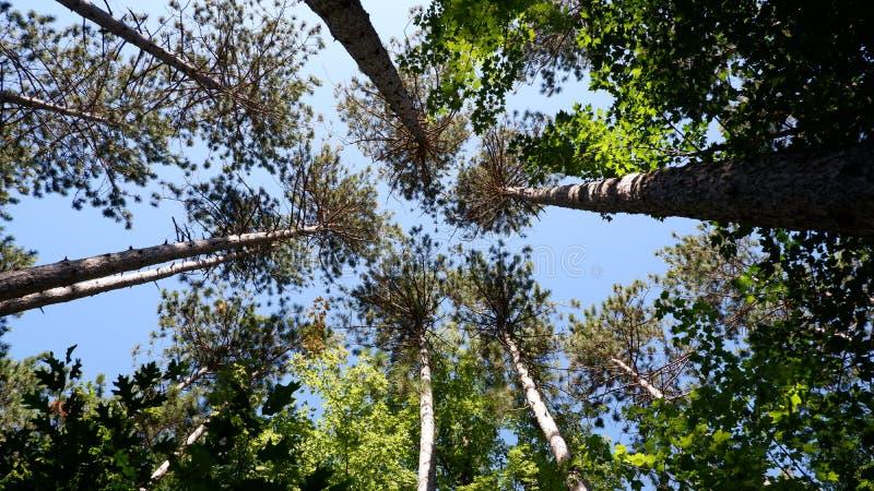 drzewa na niebo obrazy royalty free