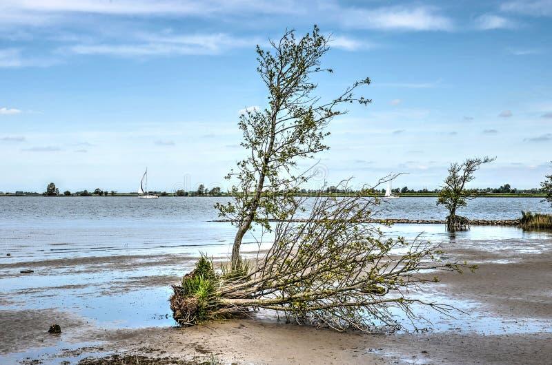 Drzewa na piaskowatej plaży zdjęcie stock