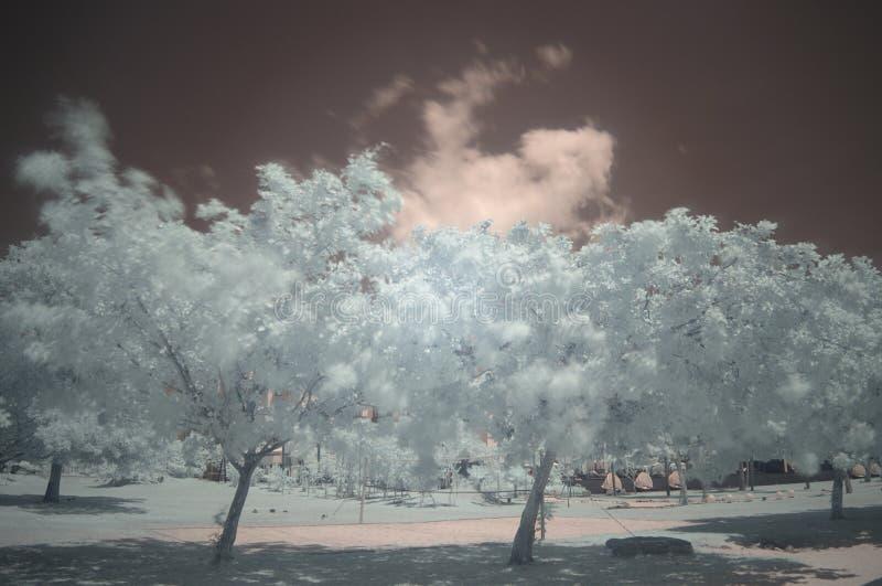 Drzewa na plażowym pasku, podczerwień, długi ujawnienie zdjęcia royalty free