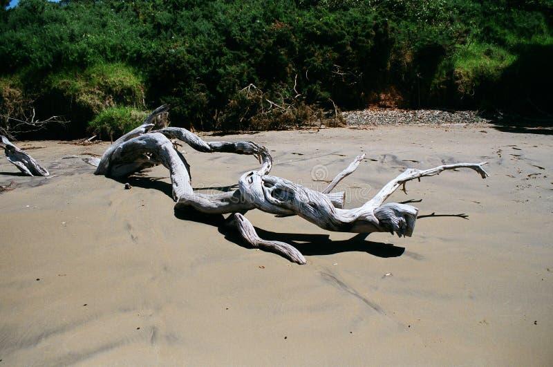 Drzewa na plaży zdjęcie royalty free