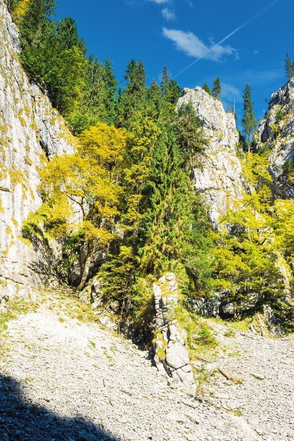 Drzewa na stromym skalistym skłonie zdjęcia stock