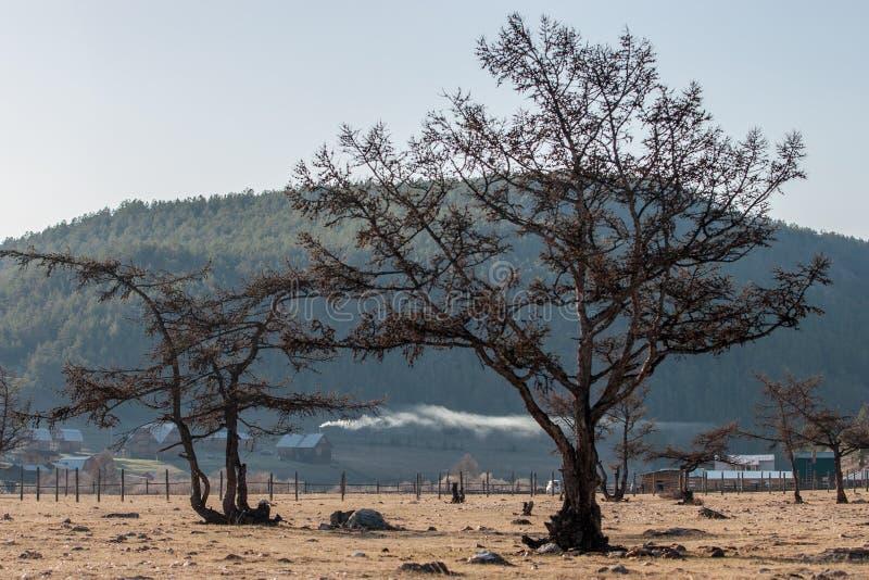 Drzewa na tle góry z drewnianymi starymi domami Z pięknym dymem od kominów obraz royalty free