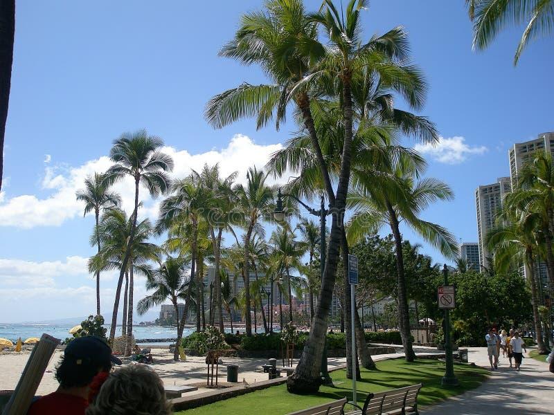 Drzewa na wyspie Oahu Hawaje obraz stock