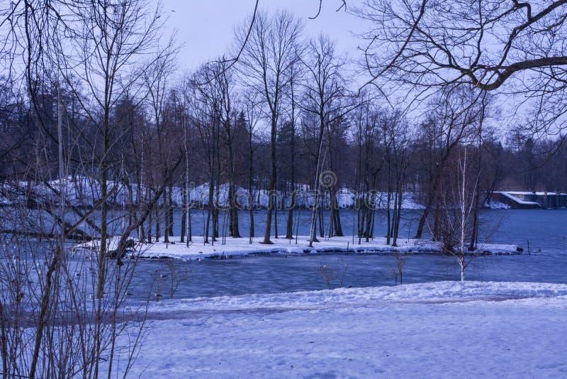 Drzewa na wyspie po środku jeziora zdjęcie royalty free