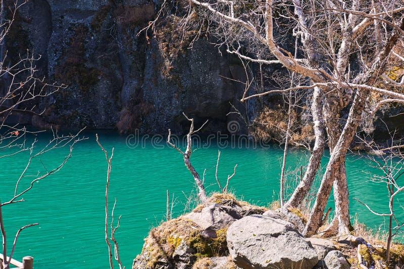 Drzewa na zielonym brzeg jeziora Changbai góry obrazy stock