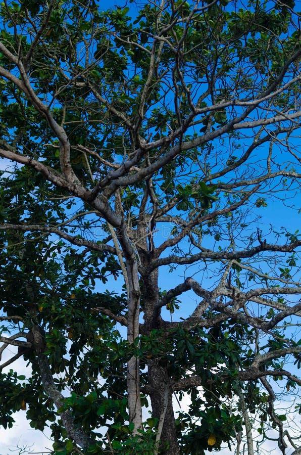 Drzewa niebieskie niebo i wierzchołek obrazy stock
