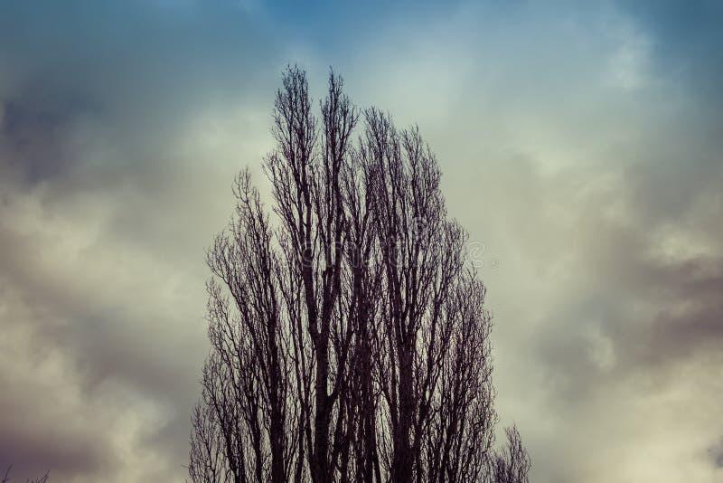 Drzewa niebo z i zdjęcia stock