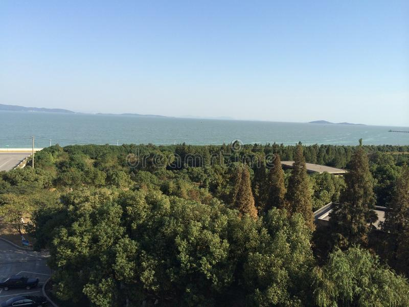 Drzewa obok jeziora obrazy royalty free