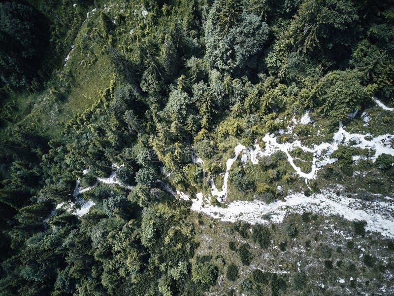 Drzewa od above, widok z lotu ptaka latanie z trutniem zdjęcia royalty free