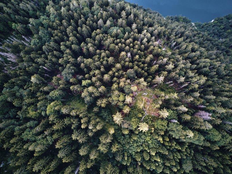 Drzewa od above, widok z lotu ptaka latanie z trutniem obraz stock