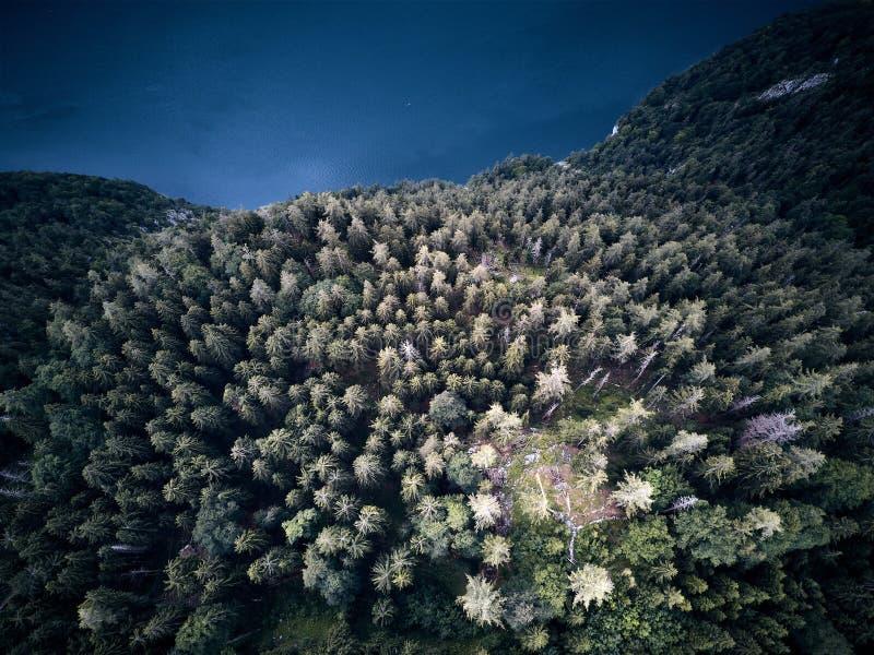 Drzewa od above, widok z lotu ptaka latanie z trutniem zdjęcia stock