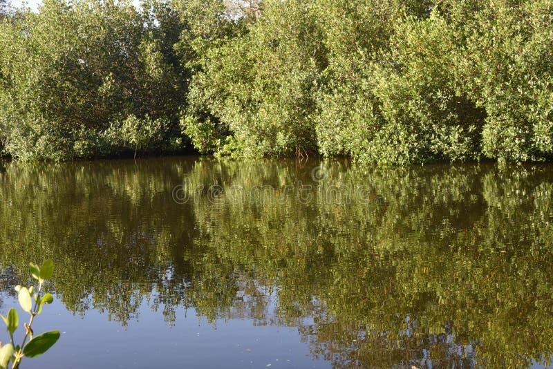 Drzewa odbijający w wodzie zdjęcia stock
