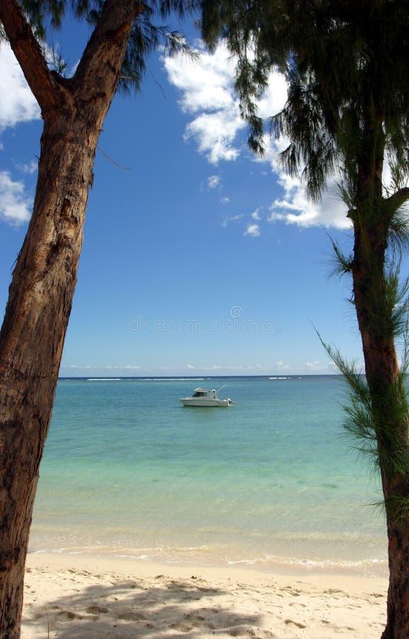 Download Drzewa łodzi zdjęcie stock. Obraz złożonej z drzewo, ocean - 28220