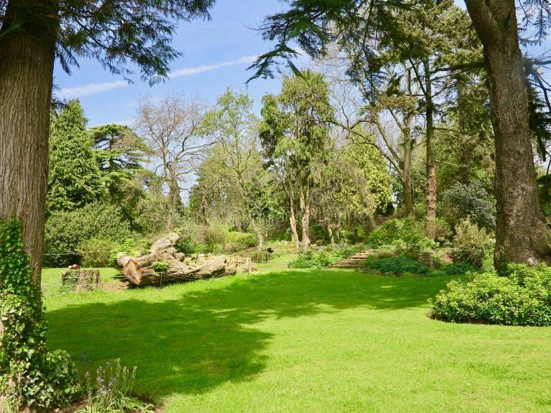 Drzewa ogród obrazy royalty free