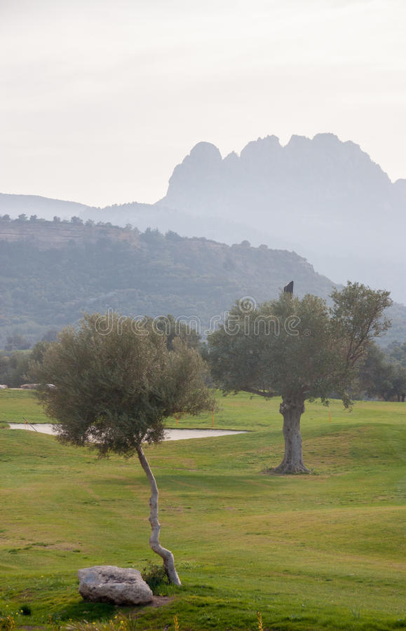 Drzewa oliwne i Pentadaktylos pasmo górskie w tle zdjęcia royalty free