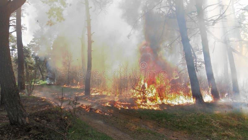 Drzewa pali w pożarze lasu fotografia stock