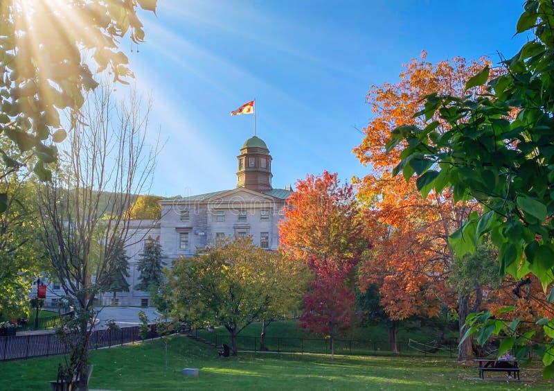 Drzewa pomarańczowe w parku na kampusie Uniwersytetu McGill jesienią, Montreal Quebec Canada zdjęcie stock