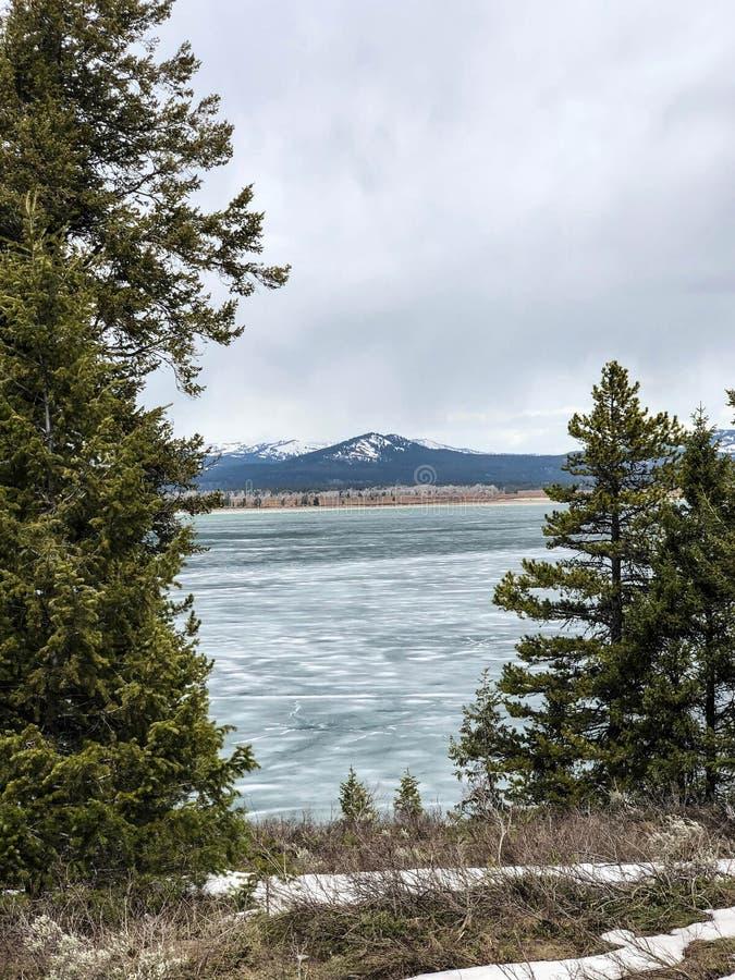 Drzewa przed jeziorem i górami przy parkiem narodowym fotografia stock